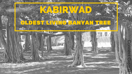 One of the oldest living Banyan tree – Kabirvad – in the midst of holy river Narmada