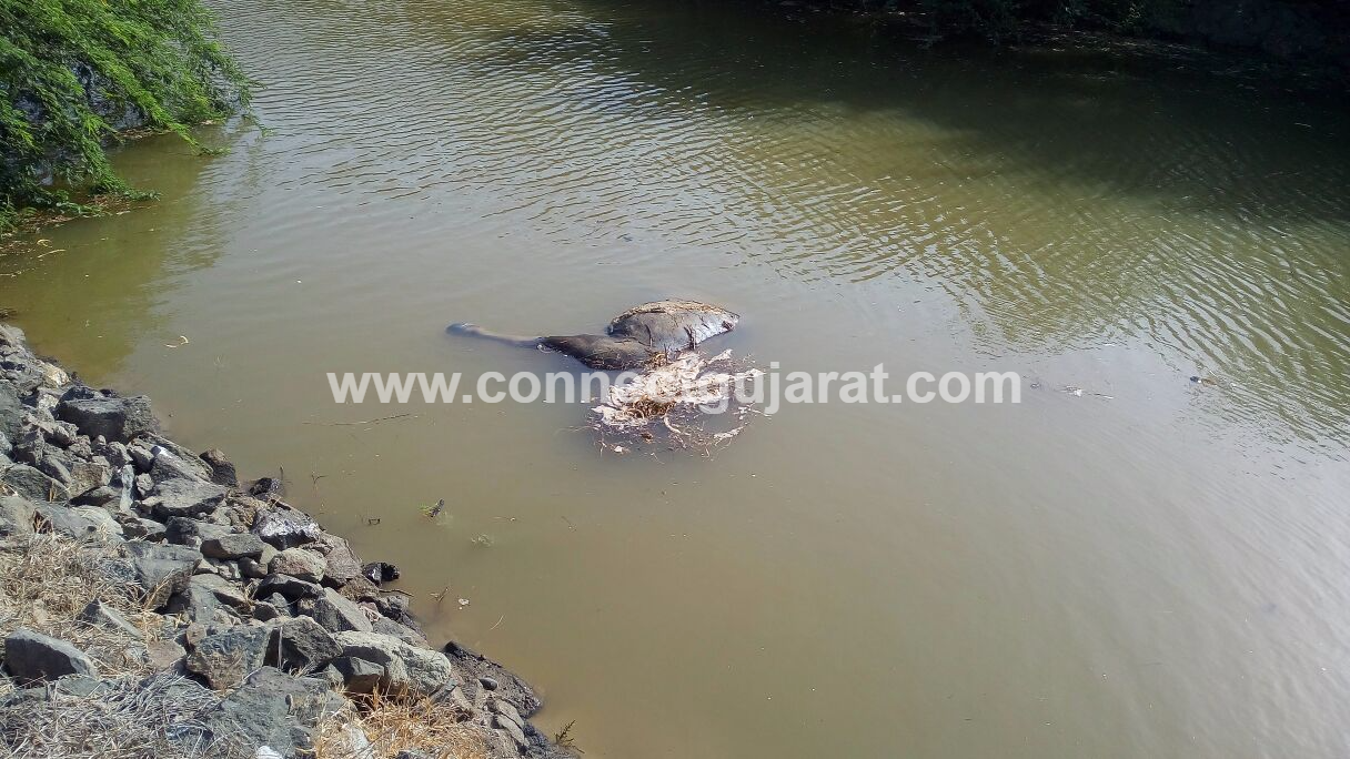 Locals protested against OPAL Dahej after killing of birds and seven buffaloes in area