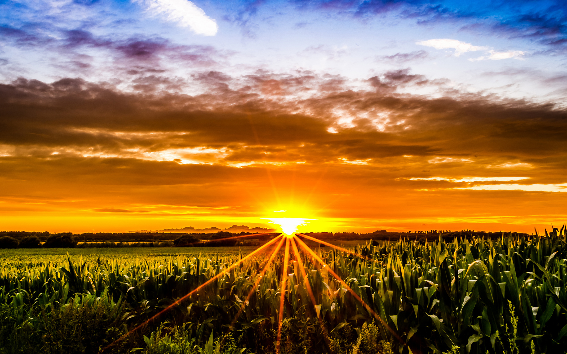 More efficient use of sunlight can improve crop yields