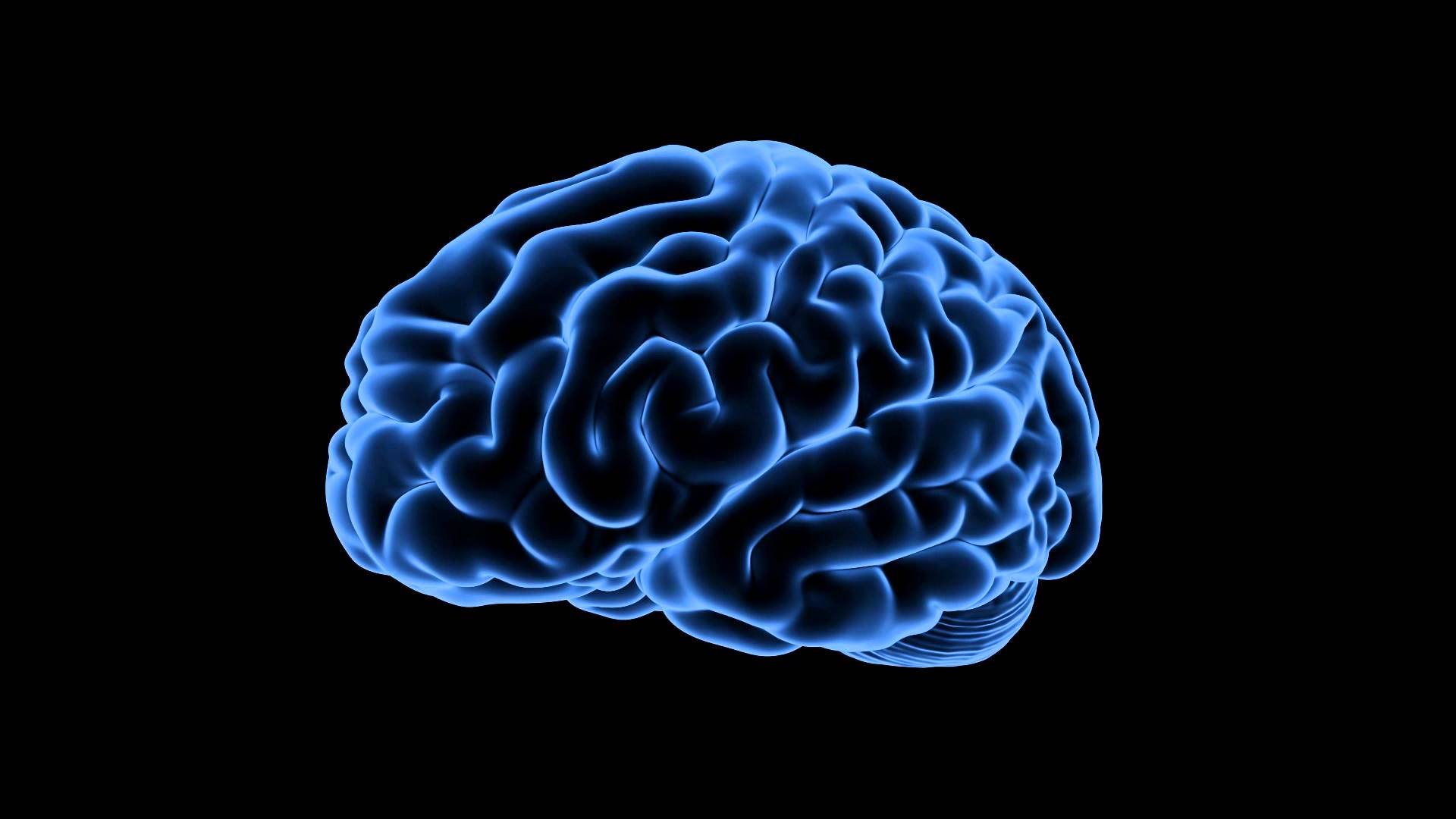 Risk avoidance in elderly linked to brain structure, not age