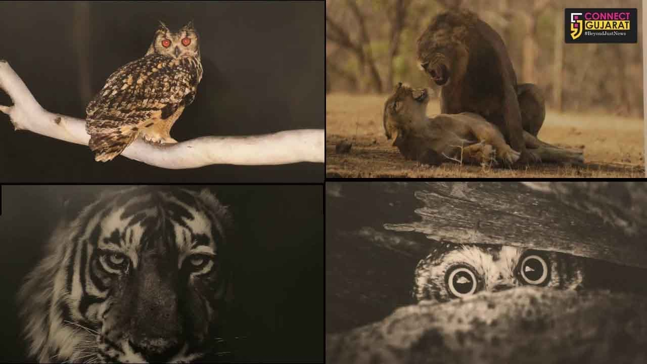 Live and rare wildlife pictures on display in MSU Fine Arts faculty