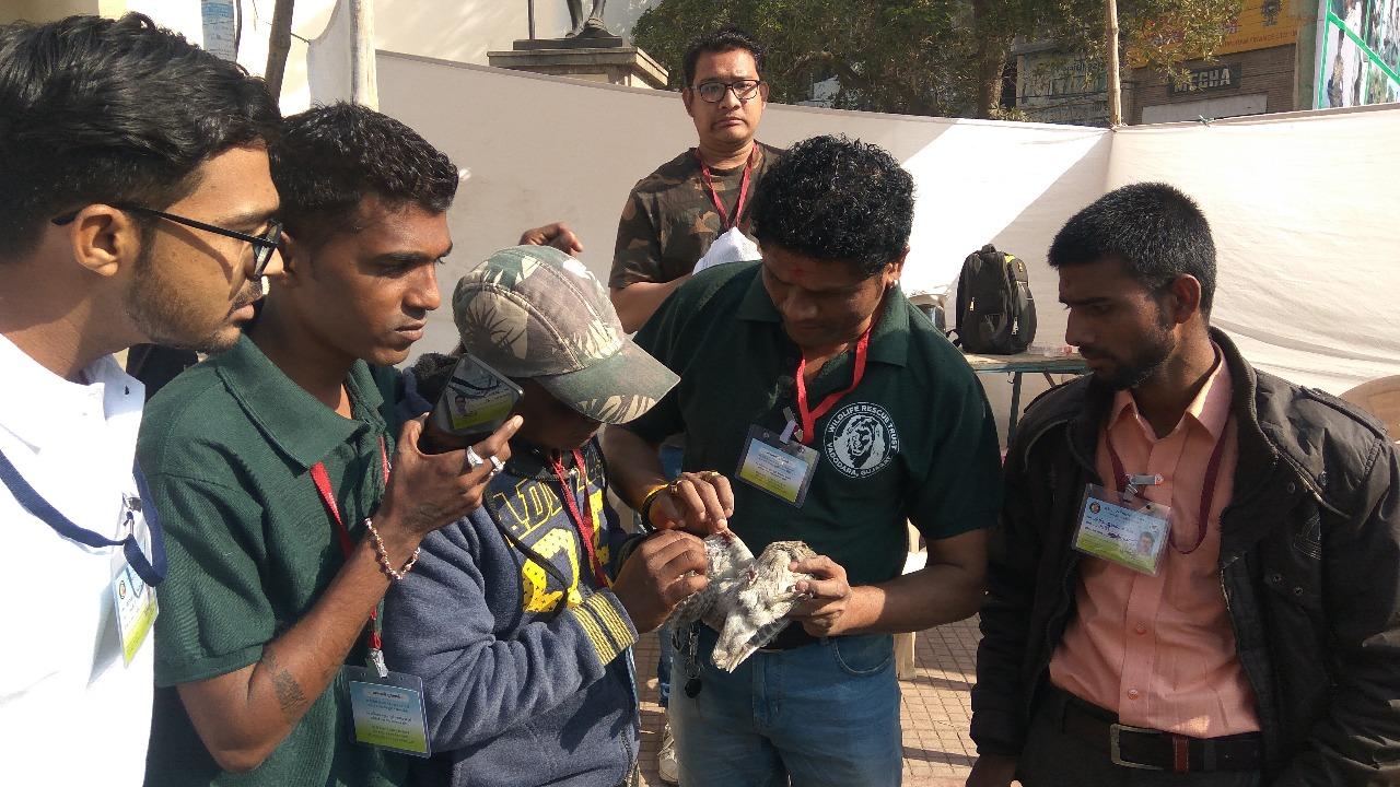Nearly 177 birds and animals hit by kite strings till evening in Vadodara