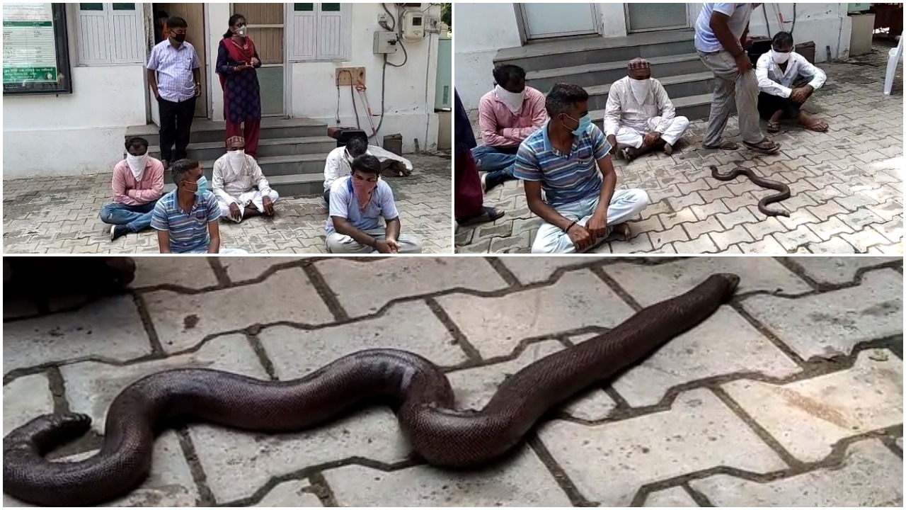 Forest department arrested five with Common Sand Boa