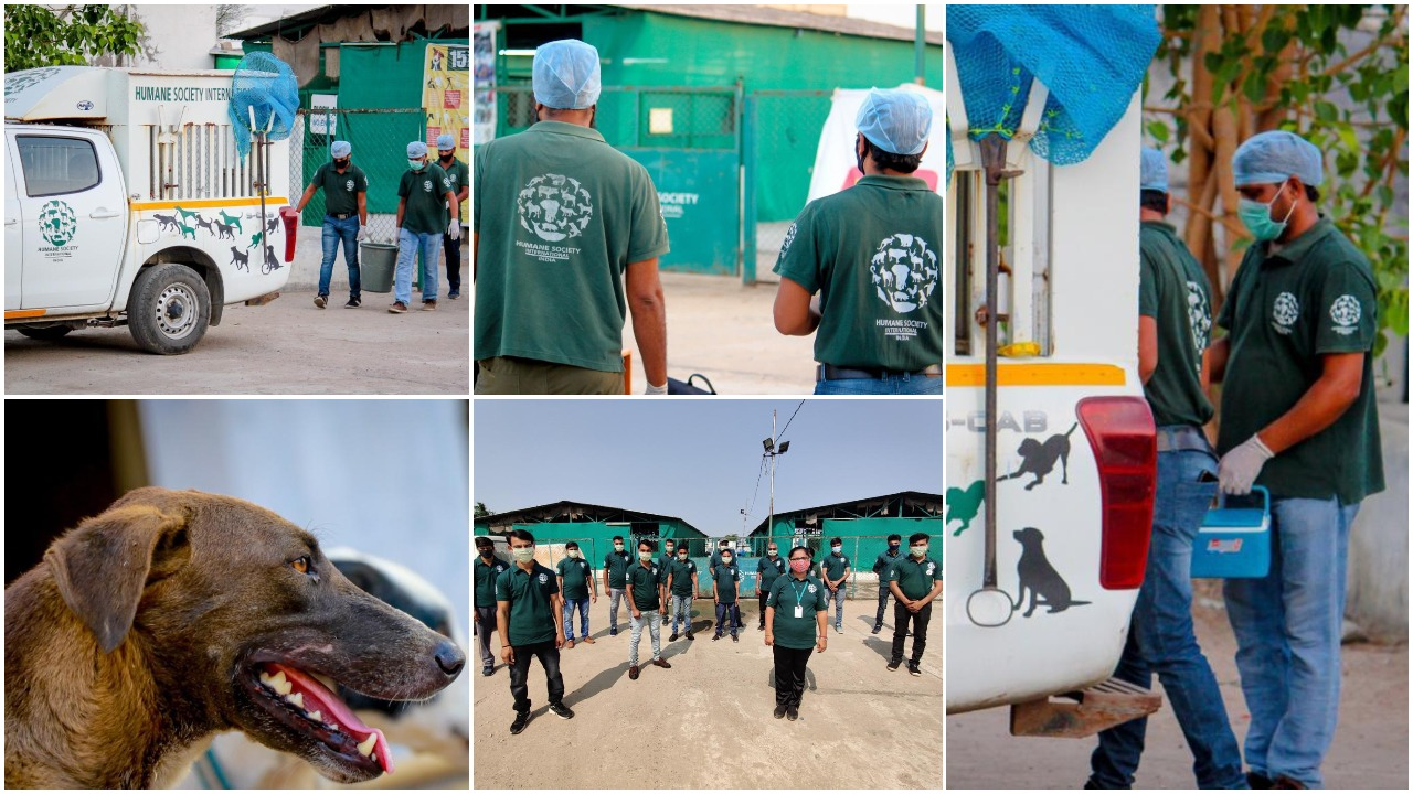 HSI India sterilizes 70% of street dogs in Vadodara for two consecutive years