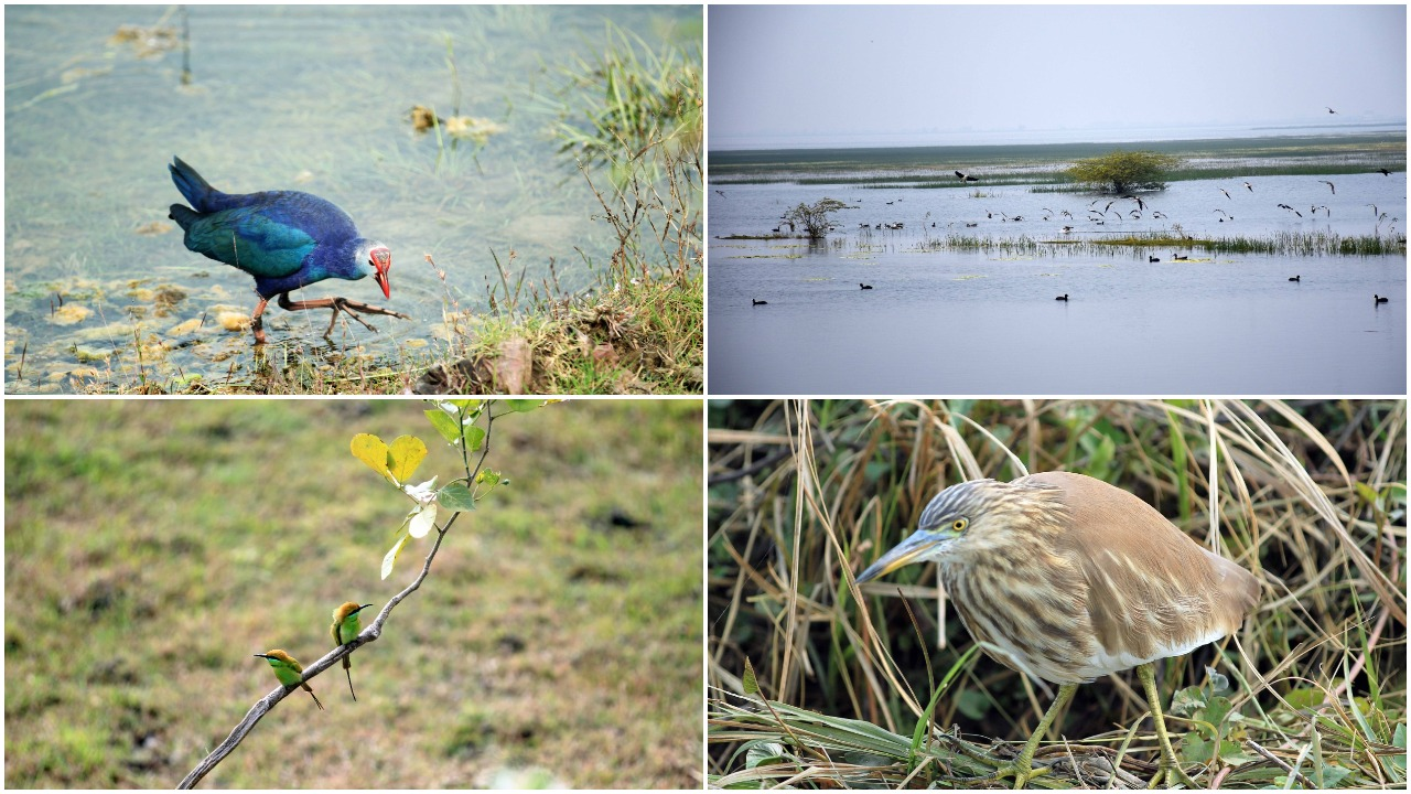 29th census of birds completed at Vadhavana Bird Sanctuary