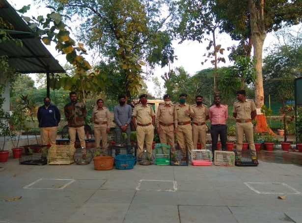 GSPCA and forest department free wildlife animals during raids in different parts of Vadodara city