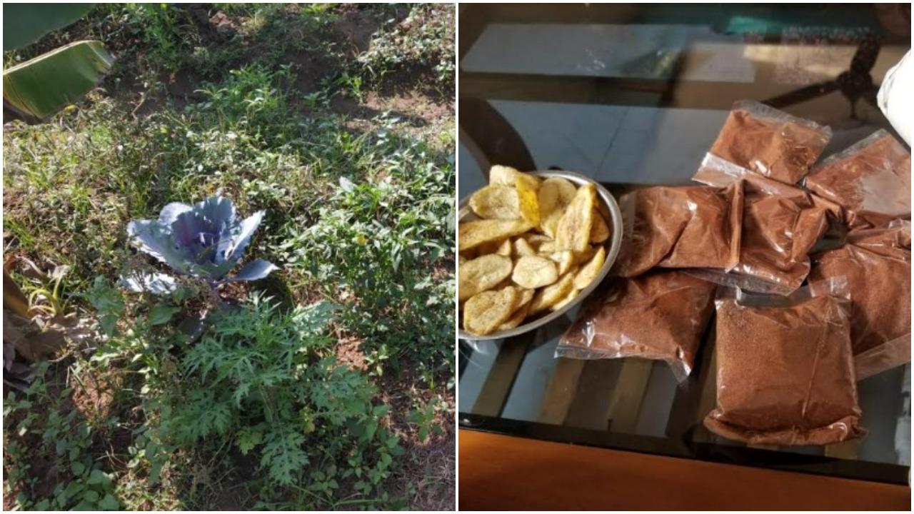 Agri-entrepreneur doing cow based farming made raw banana and local tomato powder