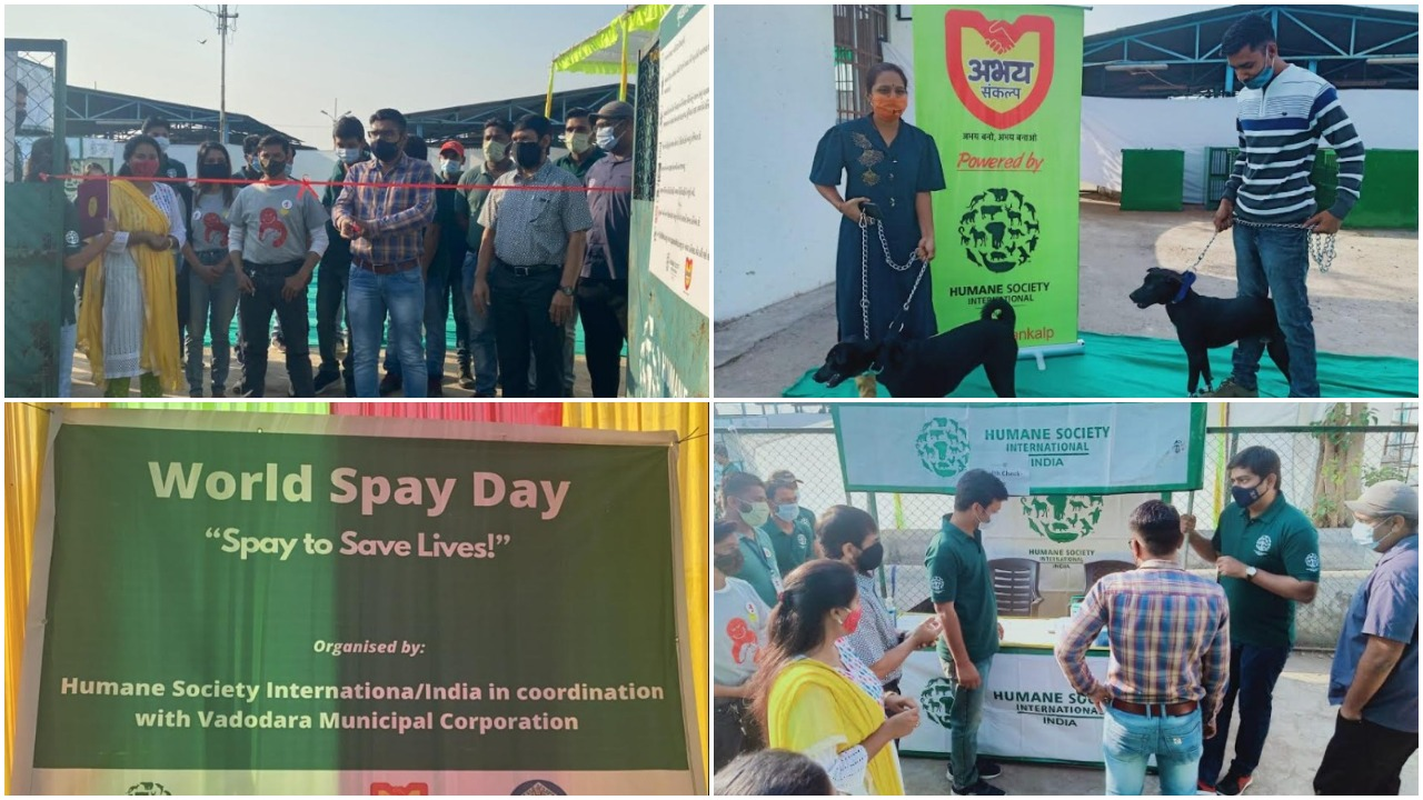 Sterilization drive held in Vadodara for community-owned dogs on World Spay Day