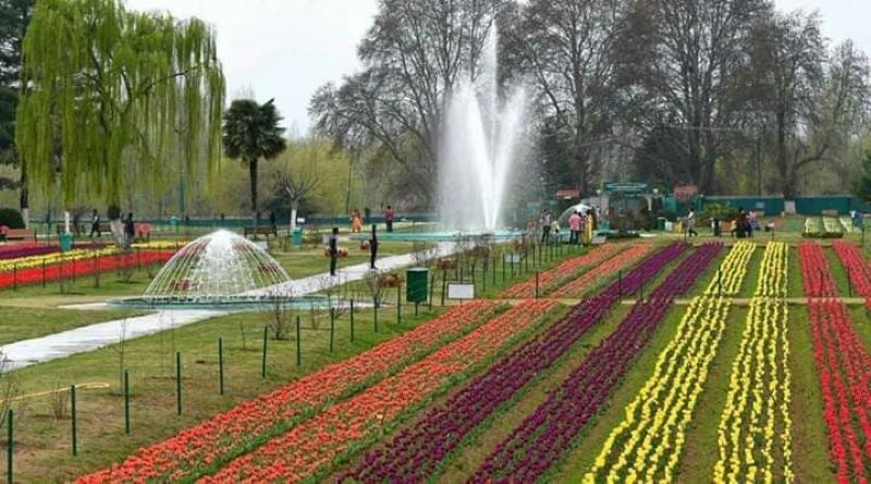 J&K Lt Governor Manoj Sinha: Tulip festival perfect opportunity to display Kashmir's unparalleled beauty