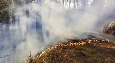 Uttarakhand witnessing unprecedented forest fires