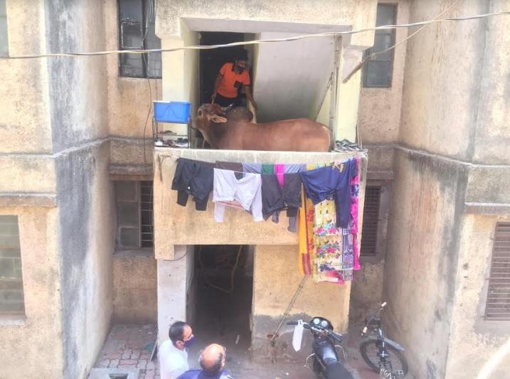Bull trapped in residential apartment in Vadodara